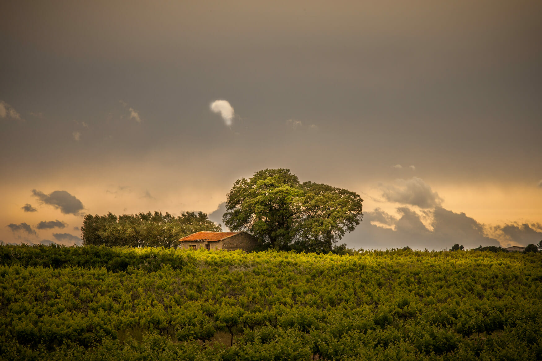 caveau vente de vins Tours et Terroirs